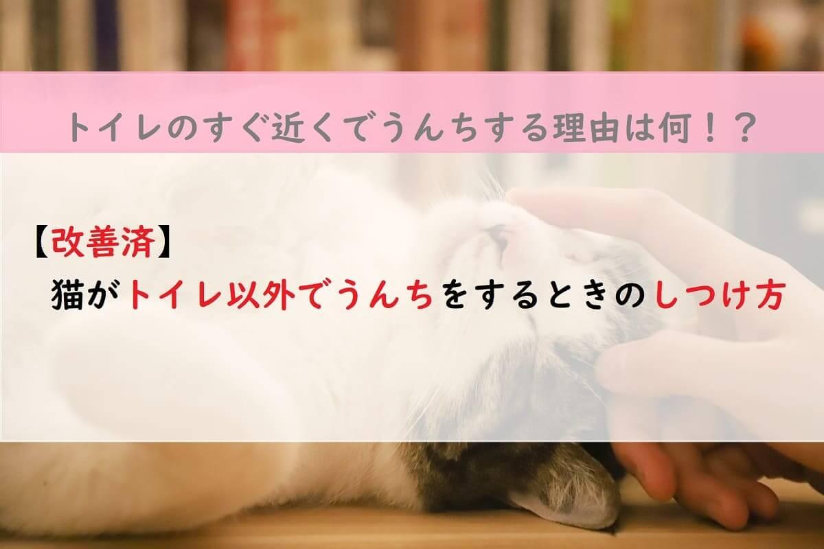 【改善済】猫がトイレ以外でうんちをするときのしつけ方